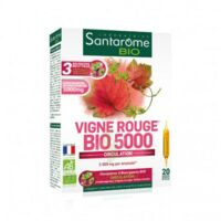 Santarome Bio Vigne Rouge Solution Buvable 20 Ampoules/10ml à TOULOUSE